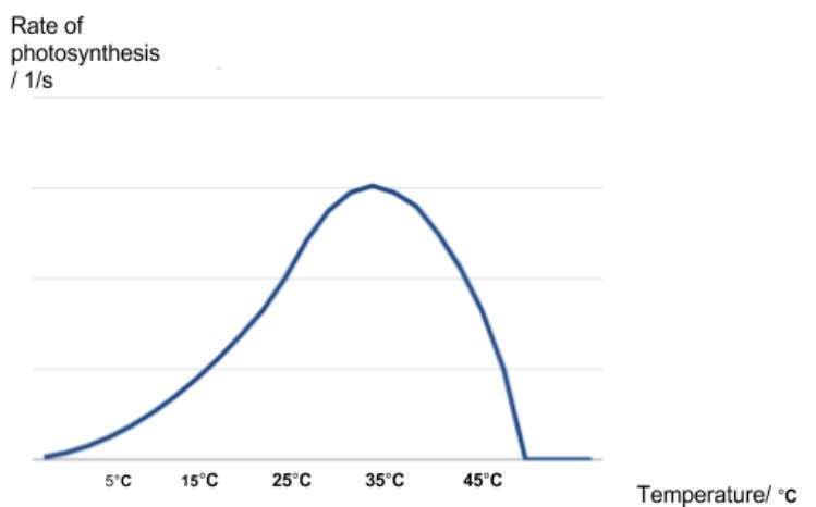 Evaluation: A curve graph that should show an increasing gradient from 5ºC to 25ºC, peaking at