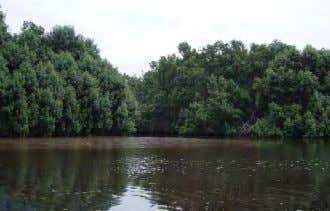 which are particu- larly prone to congestion and accidents. Example of Tall Mangrove Habitat Near Kwanda