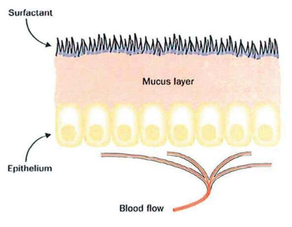 Figure 8. The mucosal barrier The mucosal barrier separates the internal milieu from the luminal environment.