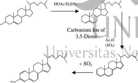 HOAc/H 2 SO 4 + HO Carbonium Ion of 3,5-Diena Ac 2 O (SO 3