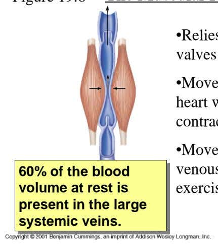 Figure 19.6 The Muscular Pump •Relies on the semilunar valves of the large veins •Moves blood