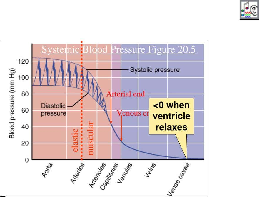 Systemic Blood Pressure Figure 20.5 Arterial end <0 when Venous end ventricle relaxes 32 elastic