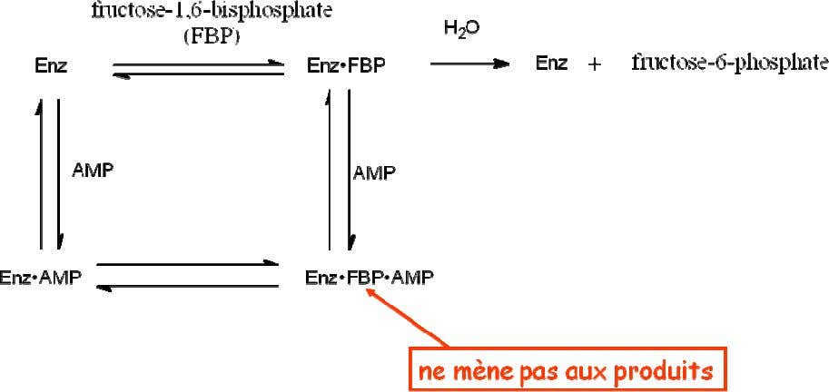 non -comp. • inhibition de la bisphosphatase de fructose par le AMP : Équations pour l'inhibition