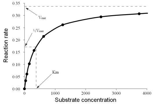 invertase activity Biochemische Zeitschrift 49 , 333 (1913) Saturation curve for an enzyme showing the relation
