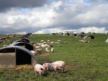 SUSTAINABLE FARMING IS A BETTER OPTION . REFERENCES CAFO SUSTAINABLE CARY , D ., GRAFMAN ,