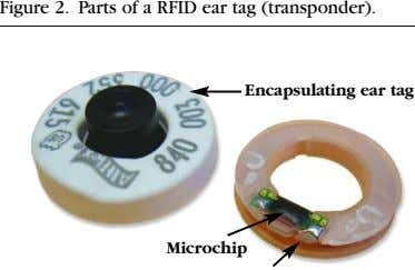 Figure 2. Parts of a RFID ear tag (transponder). Encapsulating ear tag Microchip