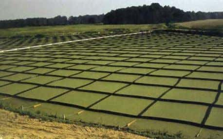 duckweed from drifting. (Photograph: Edwards et al. 1987). Photograph 5: A high density polyethylene grid system