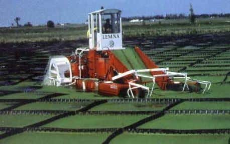 background (Thailand). (Photograph: Edwards et al. 1987). Photograph 13: Diesel-powered mechanical harvester for