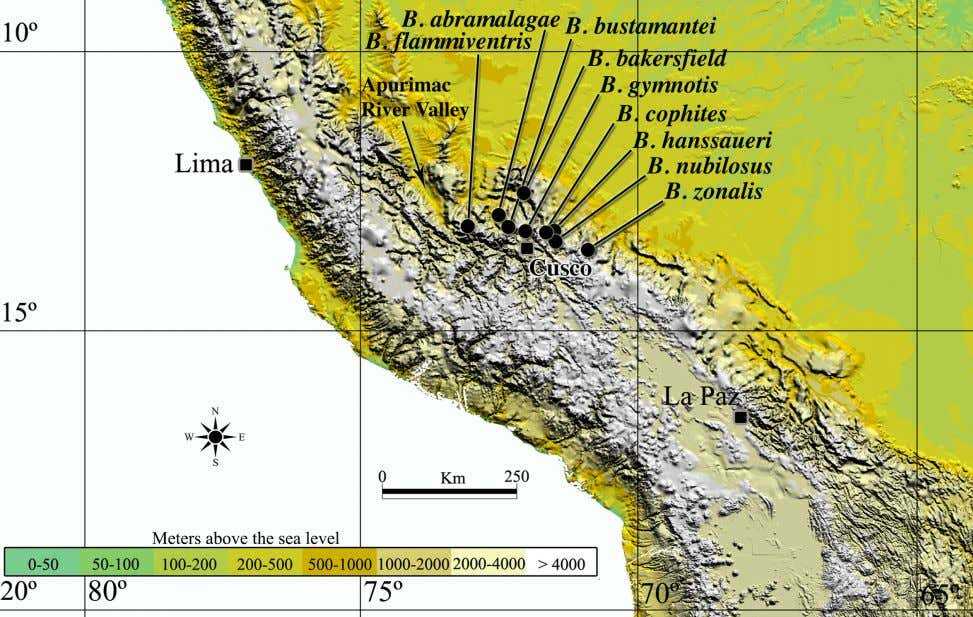 sympatry were Gastrotheca excubitor and Telmatobius sp. FIGURE 5. Map of the Peruvian Andes, showing the