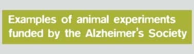 Examples of animal experiments funded by the Alzheimer's Society