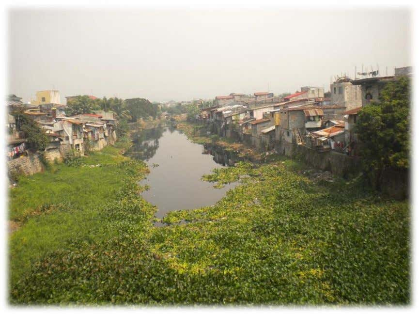"near the waterways who belong to the marginalized sector. Photo: Water hyacinth plants (""water lily"") clogging"