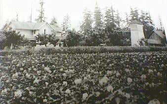 view of the Gig Harbor farm that catalyzed the author's Above: At work in the research