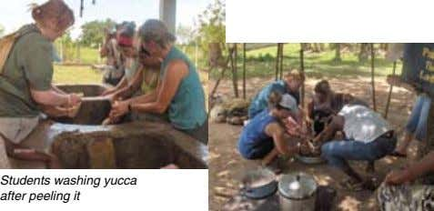 Students washing yucca after peeling it