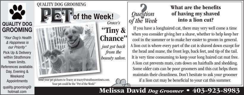 quAlITY Dog groomIng     Question ? of the Week!  of the