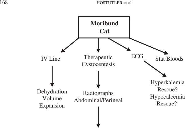 168 HOSTUTLER et al Moribund Cat Therapeutic ECG IV Line Stat Bloods Cystocentesis Hyperkalemia Rescue?