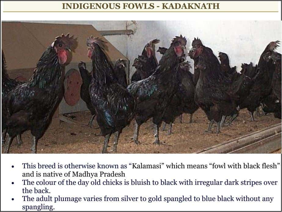 "INDIGENOUS FOWLS - KADAKNATH  This breed is otherwise known as ""Kalamasi"" which means ""fowl"
