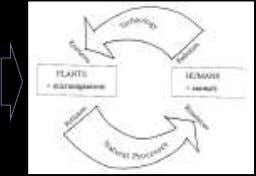 PROSES KESEIMBANGAN EKOLOGI Natural ecosystem Basic ecological balancing process Courtesy slide from Ong Bong Lai