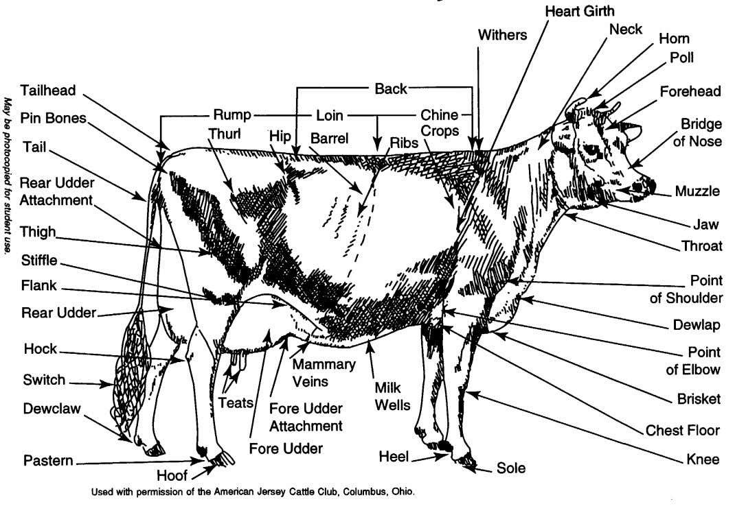 Dairy Breeds Parts of a Dairy Cow
