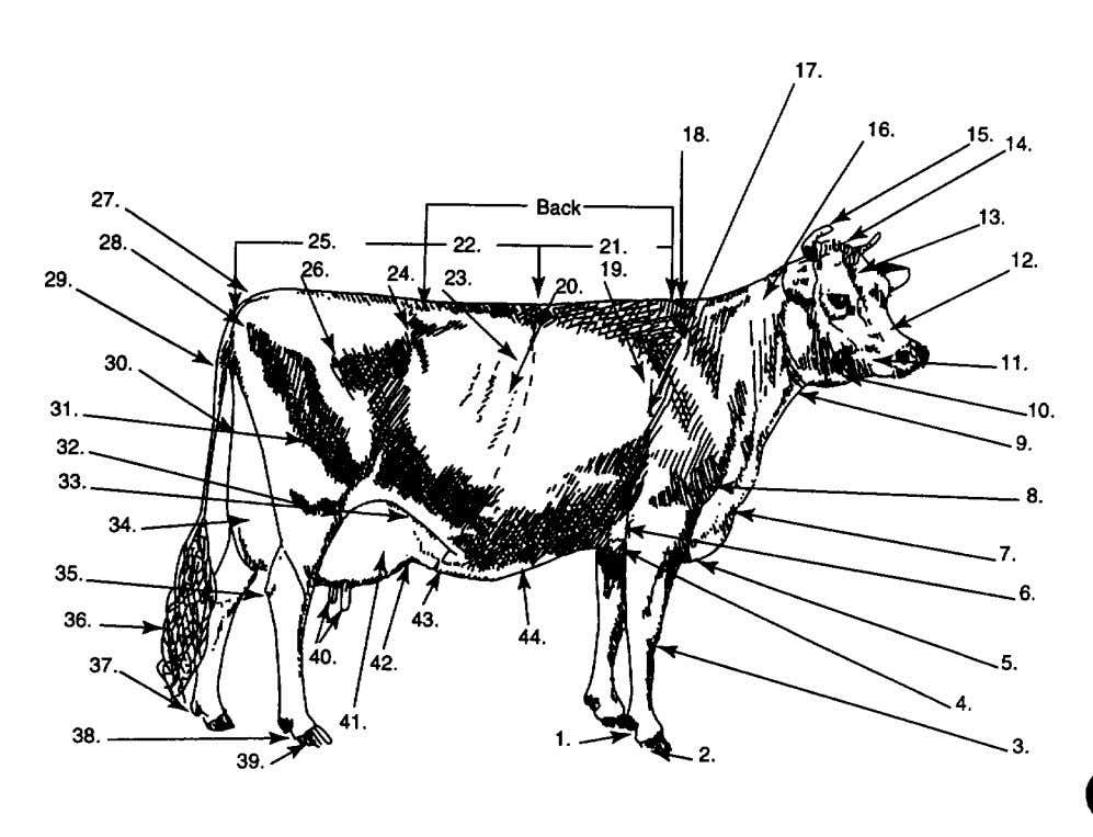 Dairy Breeds Parts of a Dairy Cow Quiz