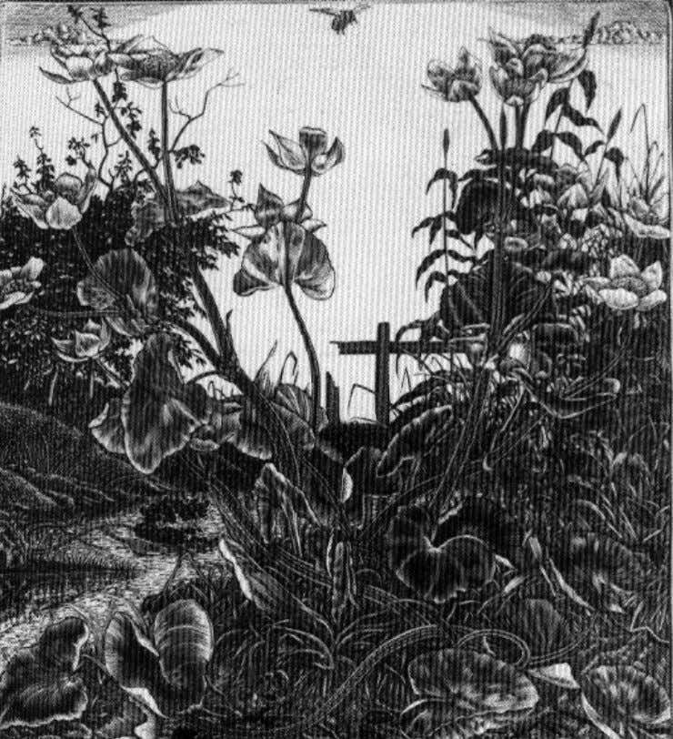 """Marsh marigolds"" 1930. Wood engraving inspired by flowers that grew in a marshy wood at"