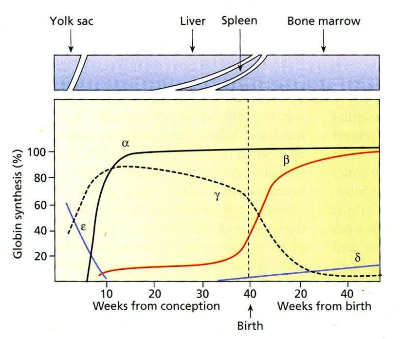 Figure 1. stages of life (Huehns ER, Dance N, Hecht S, Motulsky AG. Human embryonic