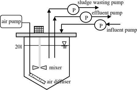 sludge wasting pump P effluent pump P air pump P influent pump 20l mixer air