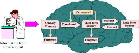 and cognitive psychologists aims to study these processes. • Central to this information processing approach is