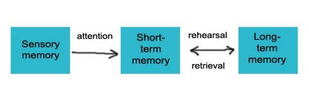 - sensory memory; short-term memory; and long-term memory. What do we know about these memory stores
