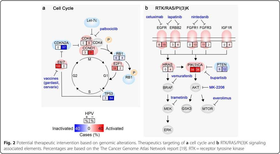 Fig. 2 Potential therapeutic intervention based on genomic alterations. Therapeutics targeting of a cell cycle