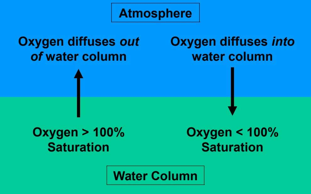 Atmosphere Oxygen diffuses out of water column Oxygen diffuses into water column Oxygen > 100% Saturation