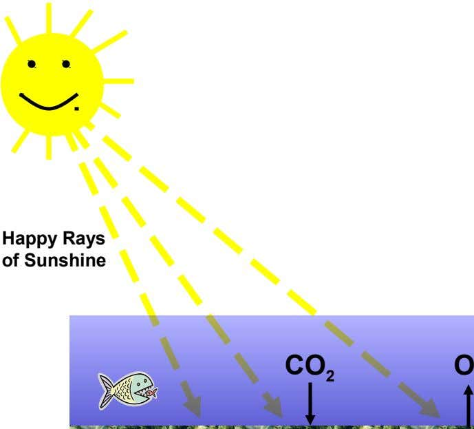 Happy Rays of Sunshine CO 2