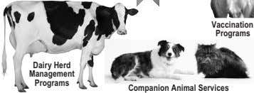 Vaccination Programs Dairy Herd Management Programs Companion Animal Services