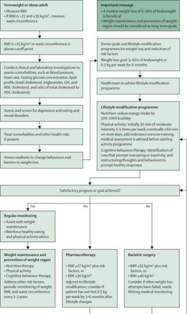 Algorithm for the stepwise management of adult patients with overweight or obesity Dietz WH et