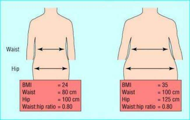 the widest portion of the buttocks. WHR = waist / hip Waist circumference and waist–hip ratio: