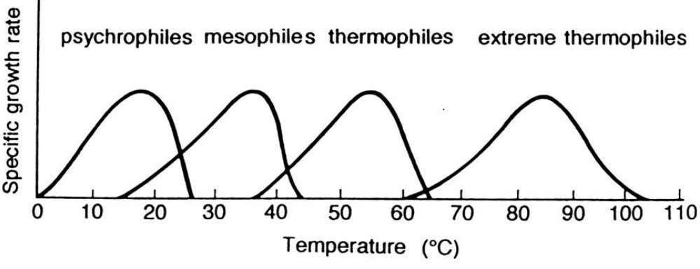 (psychrophile, mesophile, thermophile, hyperthermophile) µ = µ o * EXP(-K/T) µ = µ o * EXP(-E