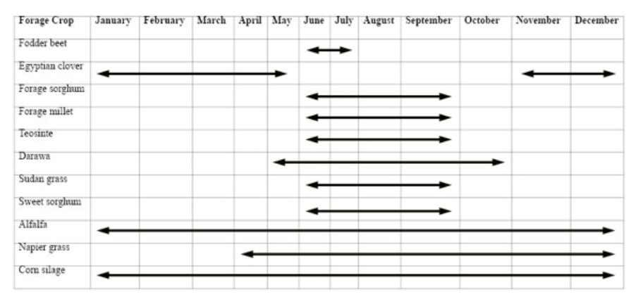 crops could not have been maintained. Figure 29. Triticale Figure 30. Fodder crops feed calendar (Figure