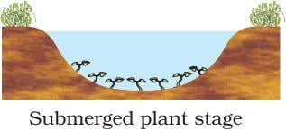 BIOLOGY 252 Figure 14.5 Diagramatic representation of primary succession years for the climax to be