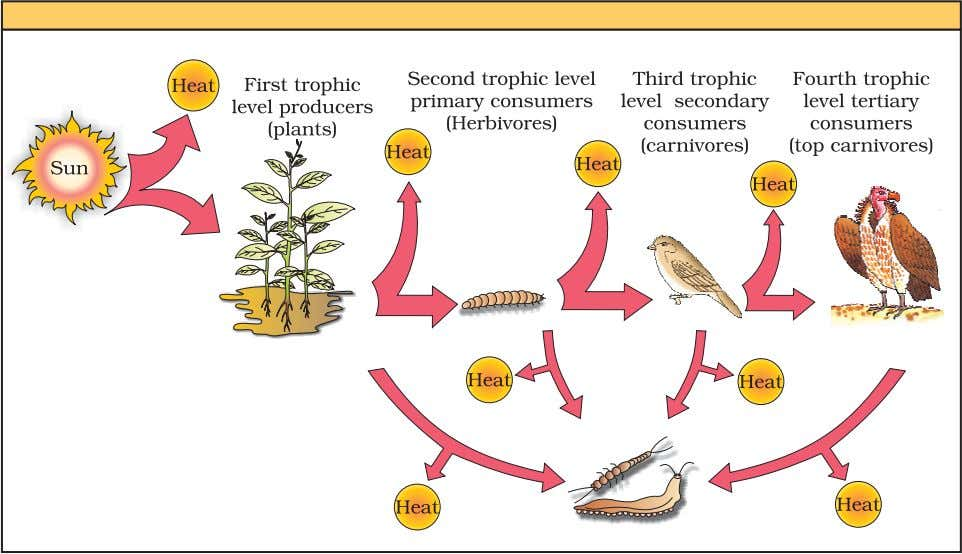 think there is any such limitation in a detritus food chain? Figure 14.3 Energy flow through
