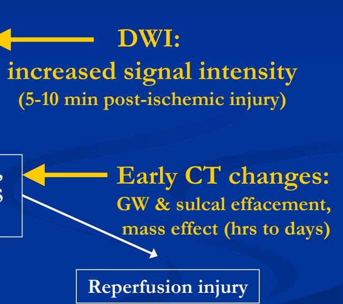 DWI: increased signal intensity (5-10 min post-ischemic injury) Early CT changes: GW & sulcal effacement,