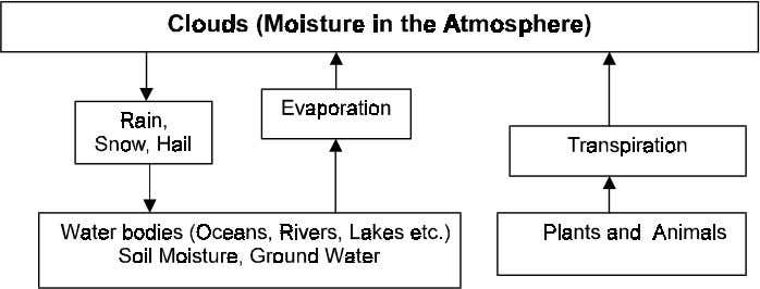 precipitation, transpiration and runoff of water. Figure 1.5 Carbon is an essential component of all plant,
