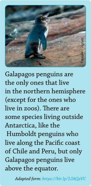 Galapagos penguins are the only ones that live in the northern hemisphere (except for the
