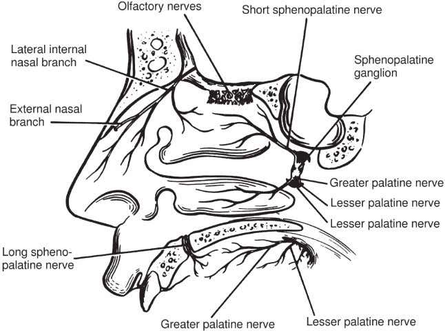 Figure 4-9 Sensory innervation of the internal nose. Figure 4-10 Sensory innervation of the nose. Lee
