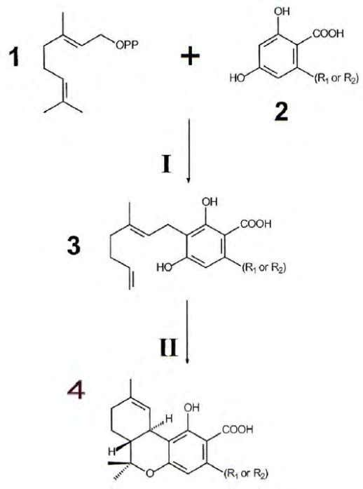 their precursors and catabolites are listed in Table 1.3. Figure 1.3. Biosynthetic pathway of THC and