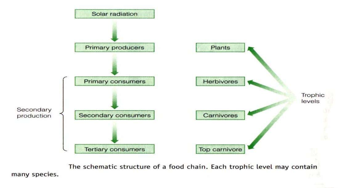 Trophic level : All the organisms that are the same number of food-chain steps from the