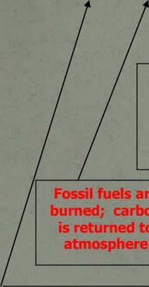 6.2 CARBON CYCLE Carbon in Atmosphere Carbon slowly released from these substances returns to atmosphere Plants