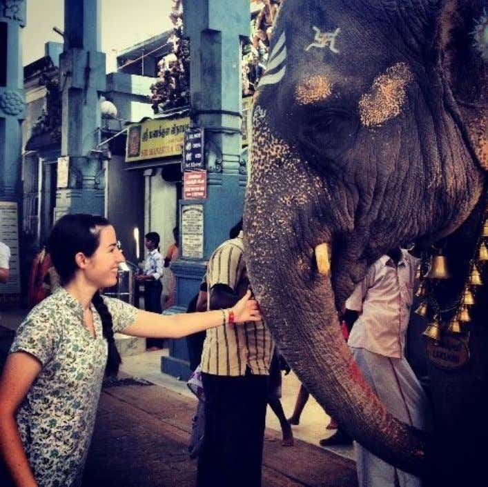 Hand a coin to Lakshmi, the resident elephant at the Manakula Vinayagar temple, and you'll get