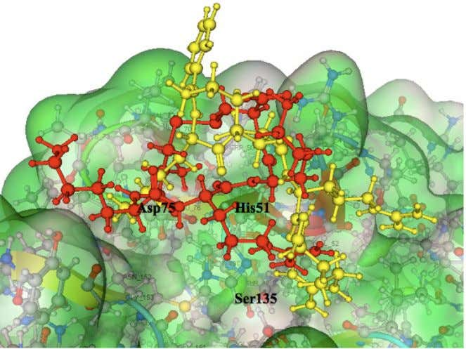result of RKR ligand (red) with KRK Ligand (yellow) Figure 3. Superimpose result of RKR ligand
