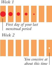 Week 1 First day of your last menstrual period Week 2 You conceive at about