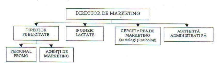 Fig. 19. Organigrama compartiment marketing Personalul compartimentului de marketing trebuie să aibă o solidă