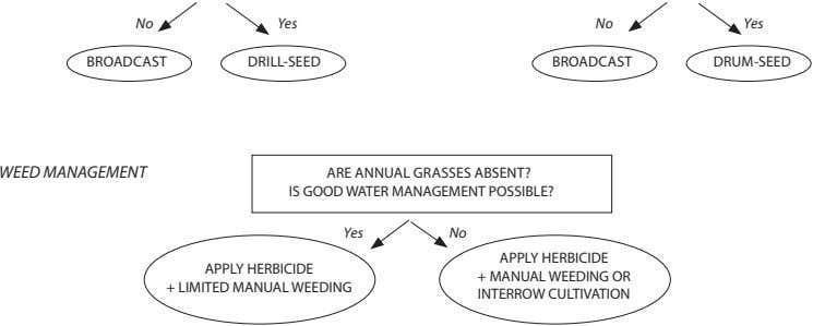 No Yes No Yes BROADCAST DRILL-SEED BROADCAST DRUM-SEED WEED MANAGEMENT ARE ANNUAL GRASSES ABSENT? IS
